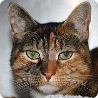 Adopt A Pet :: Frosty - North Branford, CT