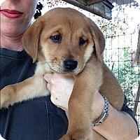 Adopt A Pet :: Kenji - Johnson City, TX
