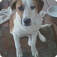 Adopt A Pet :: Piper - Oakland, AR