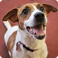 Adopt A Pet :: Hopper - New Orleans, LA