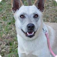Adopt A Pet :: Jenny - San Ramon, CA