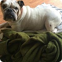 Adopt A Pet :: Cookie - Odessa, FL