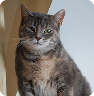 Calico Cat for adoption in Cuba, New York - Molly