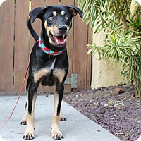 Adopt A Pet :: Javi - from Costa Rica - Los Angeles, CA