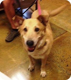 Husky/Shepherd (Unknown Type) Mix Dog for adoption in Dawson, Georgia - Babe