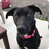 Adopt A Pet :: Izzy - Xenia, OH