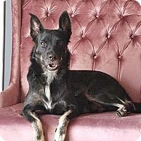 Adopt A Pet :: Fancy - Grafton, WI
