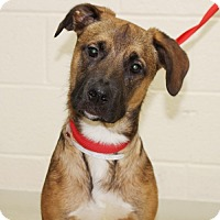 Adopt A Pet :: 23484 - Mason - Ellicott City, MD