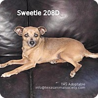 Adopt A Pet :: Sweetie - Spring, TX