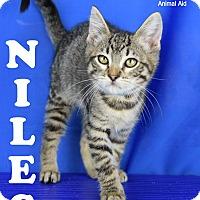 Adopt A Pet :: Niles - Carencro, LA