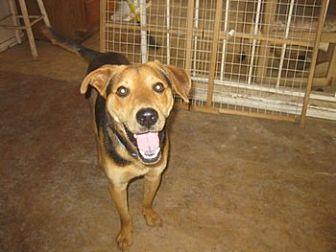 Beagle/Hound (Unknown Type) Mix Dog for adoption in San Antonio, Texas - P J