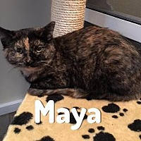 Adopt A Pet :: Maya - Pittsburgh, PA