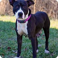 Adopt A Pet :: Nisa - Waldorf, MD