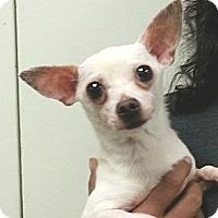 Adopt A Pet :: Lester - Orlando, FL
