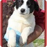 Adopt A Pet :: Gretel - Staunton, VA