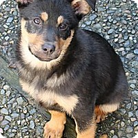 Adopt A Pet :: NUKKA~ADOPTED! - North Vancouver, BC