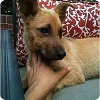 Adopt A Pet :: Marcus - Alexandria, VA