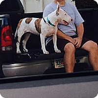 Adopt A Pet :: Olivia - Miami, FL