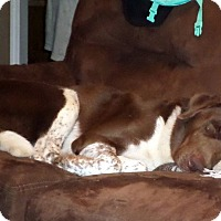 Adopt A Pet :: Hemi - Huntsville, AL