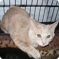 Adopt A Pet :: Buffy -Adoption Pending! - Colmar, PA