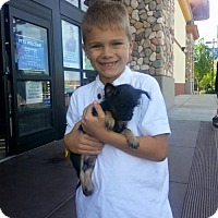 Adopt A Pet :: Dizzy - Sacramento, CA