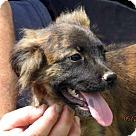 Adopt A Pet :: Ted