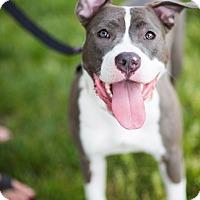 Adopt A Pet :: Zelda - Reisterstown, MD