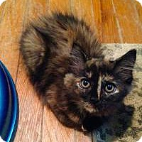 Adopt A Pet :: Raggedy Ann & Piper - Bear, DE