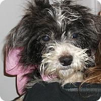 Adopt A Pet :: Daisy - Foster, RI