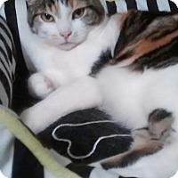 Adopt A Pet :: DIAMOND - Mesa, AZ
