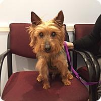 Adopt A Pet :: Fraser Crane - N. Babylon, NY