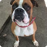 Adopt A Pet :: Hankus - Austin, TX