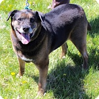 Adopt A Pet :: LYRIC - Albany, NY