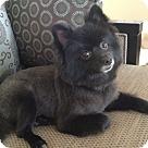 Adopt A Pet :: Jackson (COURTESY POST)
