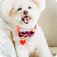 Adopt A Pet :: Cheese Puff - Los Angeles, CA