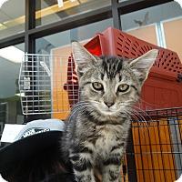 Adopt A Pet :: Rhiannon - Elyria, OH