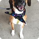 Adopt A Pet :: Teo - Adoption Pending