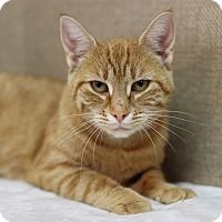 Adopt A Pet :: Queen Orangela - Midland, MI