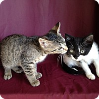 Adopt A Pet :: Destiny/Domino/Dante - Thomaston, GA
