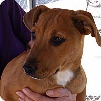 Adopt A Pet :: Greta - Tucson, AZ