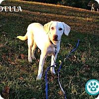 Adopt A Pet :: Della - Kimberton, PA