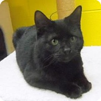 Adopt A Pet :: Kisses - Janesville, WI