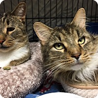 Adopt A Pet :: Loki and Tanks - Warwick, RI