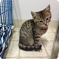 Adopt A Pet :: ember - Bryan, OH