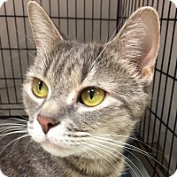 Adopt A Pet :: Puritan - Norwalk, CT