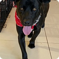Adopt A Pet :: Moose - Culver City, CA