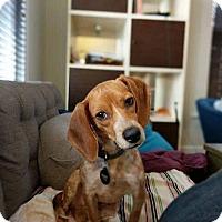 Adopt A Pet :: Trudy - Greenfield, WI