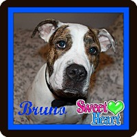 Adopt A Pet :: Bruno - Friendswood, TX