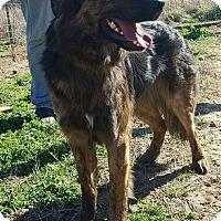 Adopt A Pet :: Dov Bear~meet me!~ - Glastonbury, CT
