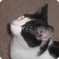 Adopt A Pet :: Perry - Stafford, VA